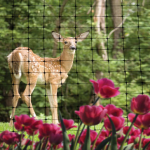 Netting-Wildlife-NettingDeer-square