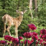 Netting-Wildlife-NettingDeer-square